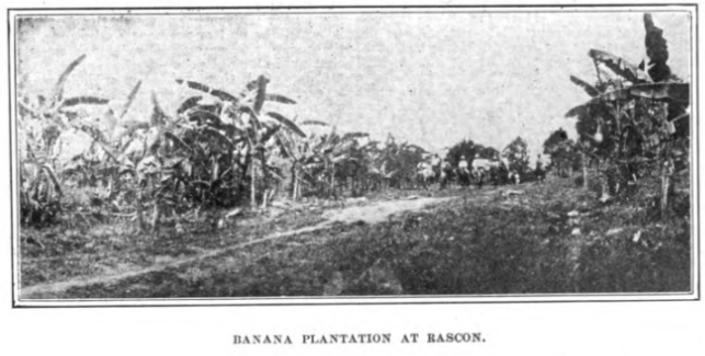 Ingenio Rascon Banana Plantation - HathiTrust