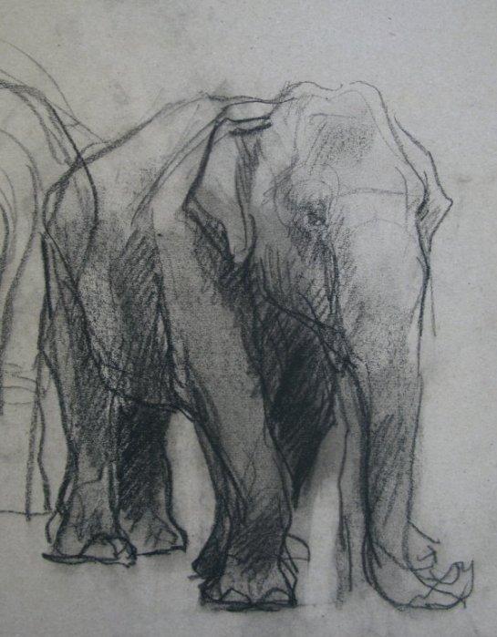 Olifant, krijt op papier, 30x20 cm, 2010