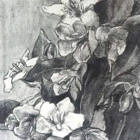 Weigela, houtskool, 41x39 cm, 2017