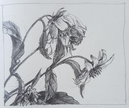 Aardpeer, potlood in schetsboek, 2017