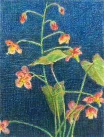 Elfenbloempje, kleurpotlood op papier, 10.5x8 cm, 2019