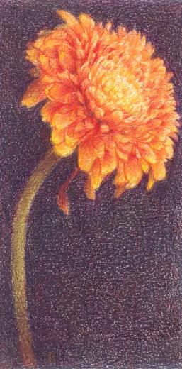 Oranje gerbera, kleurpotlood op papier, 13x7 cm, 2019