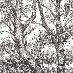 Berken, 28x12 cm, fineliner op papier, 2019