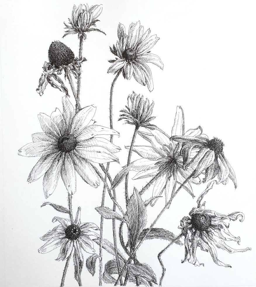 Rudbeckia, fineliner op papier, 28.3x25.7 cm, 2019