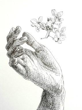 Gevonden hortensia, fineliner op papier, 14x10.8 cm, 2020