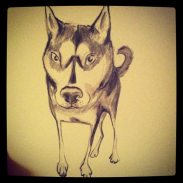 Sketch of a dog by artist Claire Dunaway