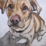Pet Portrait | Foster | Claire Dunaway Studios