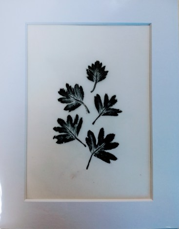 SOLD Hawthorn, monotype, unique, 12x17cm, £3