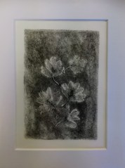 SOLD Hawthorn, monotype, unique, 12x17cm, £2