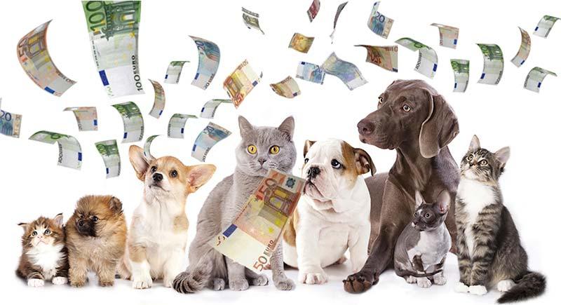 Pet shop di successo