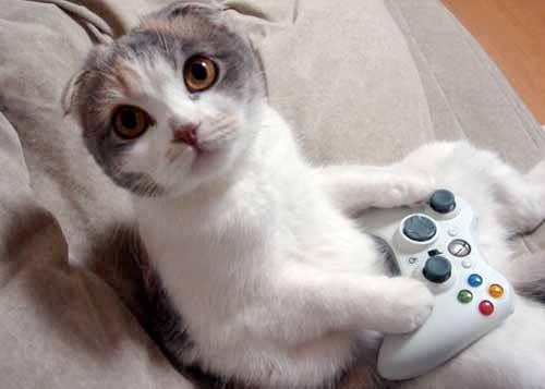 Xbox_gatinho