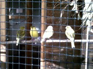 Visit the aviary for some quiet time