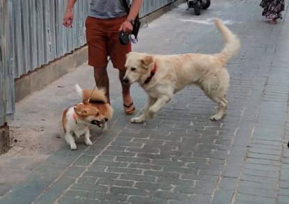 новые друзья в Антальи
