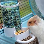 OMGO Hianiquaime Distributeur Automatique de Nourritures à Suspendre au Cage pour Lapin Perroquet Cochons d'Inde Rongeur ou Autres Petits Animaux Pet Feeder Bleu/Blanc