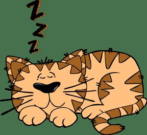 Sleeping cat. Clara bush blog