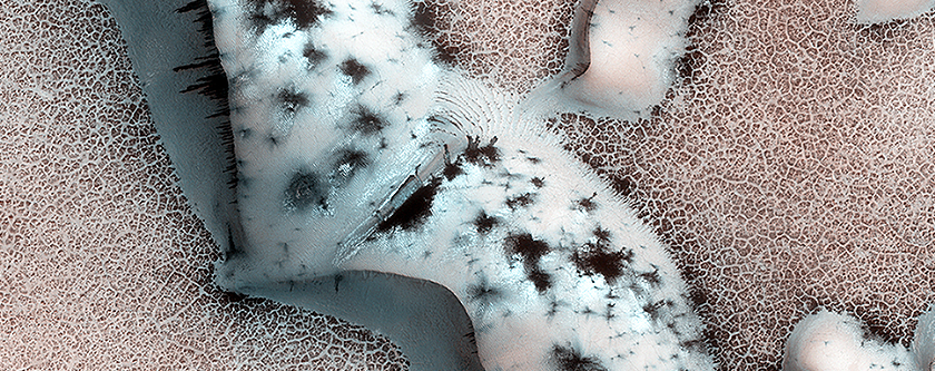 Ghost forest of Mars