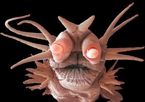 alien looking ocean-worm