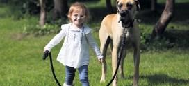 Killaloe hero sparks interest in Great Dane pups