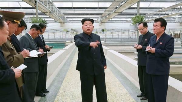 Neste sem data prevista hoje pela agência de notícias KCNA, imagem oficial da Coréia do Norte, o líder norte-coreano está a visitar uma fazenda de preservação e reprodução de tartarugas aquáticas.  AFP