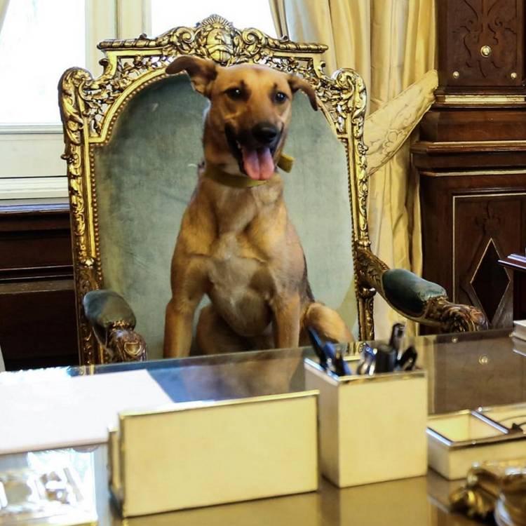 Resultado de imagen para Macri Perro sillon presidencial