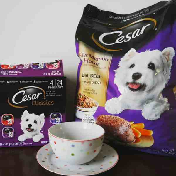 How To Mix Up Your Dog's Mealtime With An Exciting Meal Plan