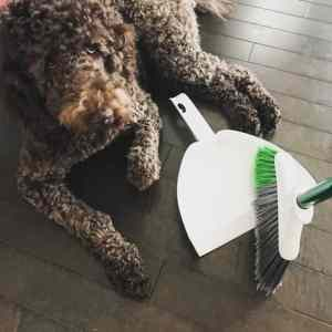 How To Streamline Your Spring Cleaning With This One Tool