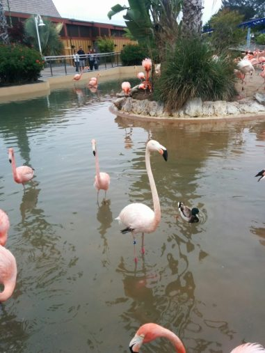 Flamingos at Sea World