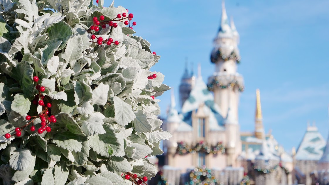 A close up of a flower by Disney castle