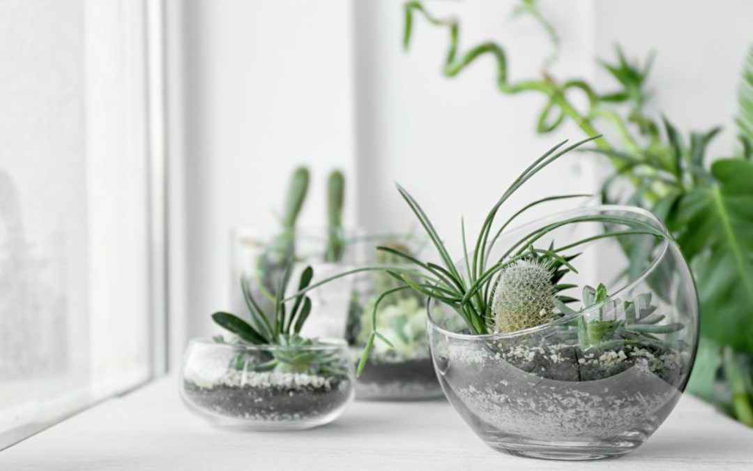 Make & Take: Succulent Planter Workshop