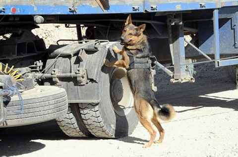 Military Working Dogs Join Task Force Currahee Clarksville Tn Online