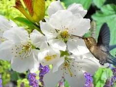 fiori_primavera