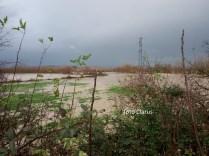 fiume volturno (3)