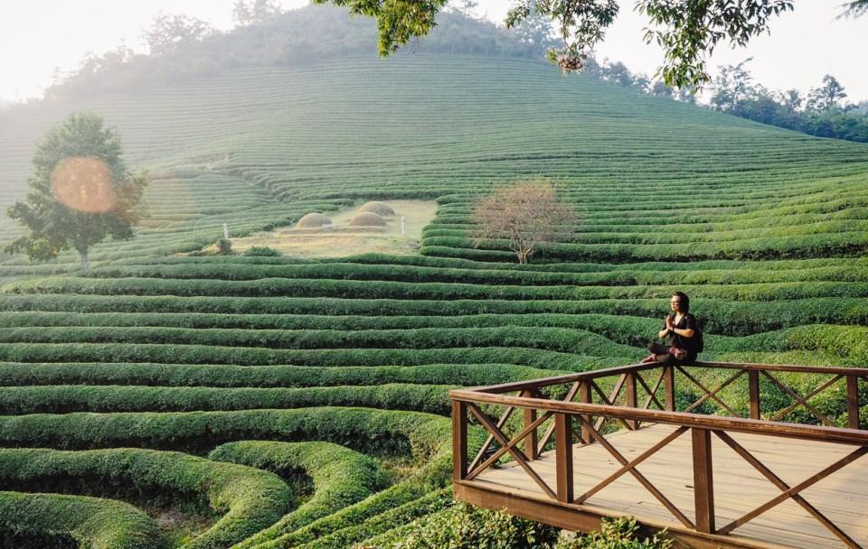 Korea: Boseong Green Tea Field
