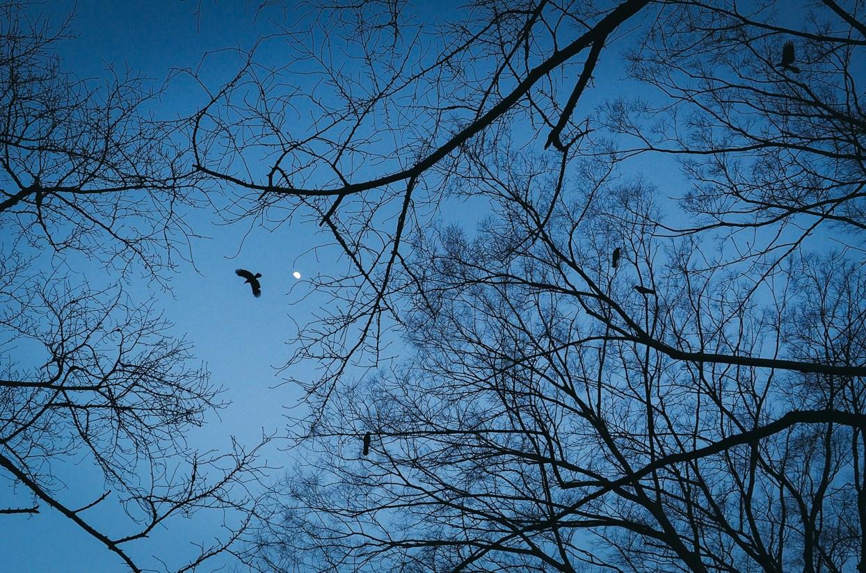 Weekly Photo Challenge : Look Up