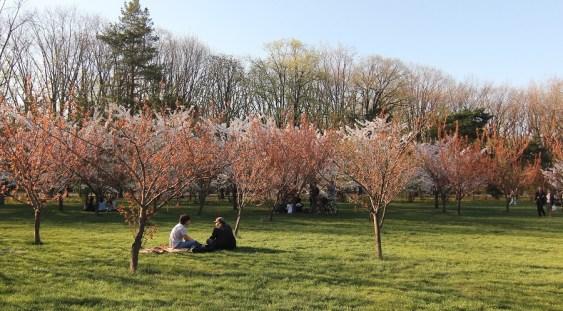 Se redeschide Grădina japoneză din Herăstrău