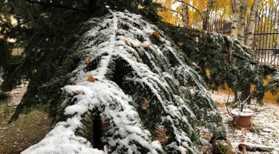 Prima ninsoare a iernii în București