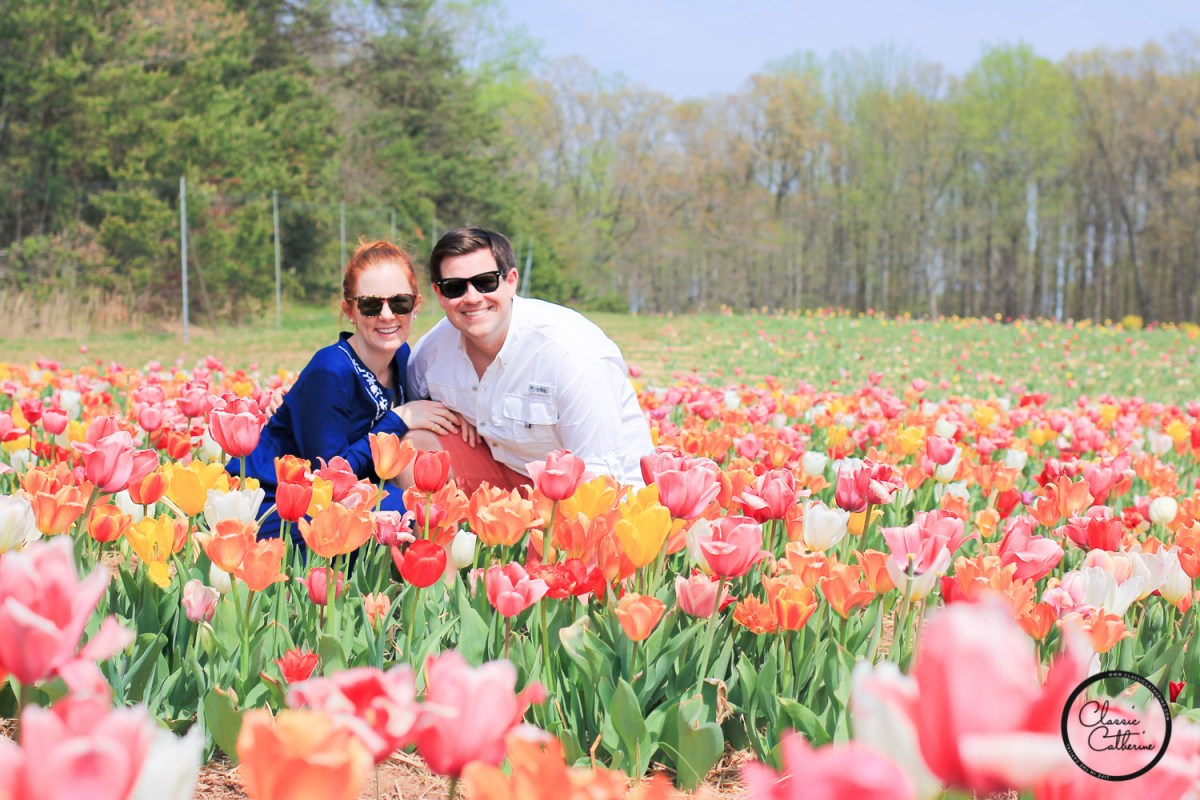 Tulip Picking in Haymarket, VA