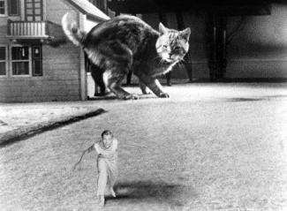 1957 incredible shrinking man grant williams cat