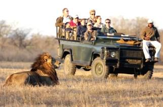 Why Millions Choose Africa As Their Safari Destination
