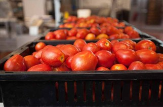 Ghana Loses 56 billion CFA Annually On Tomato Importation