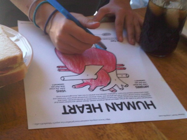 heart-dissection