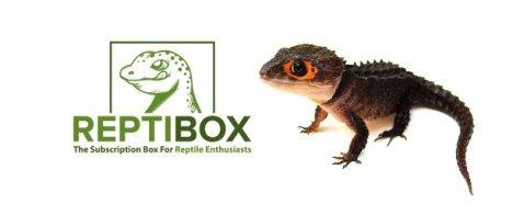 Reptibox