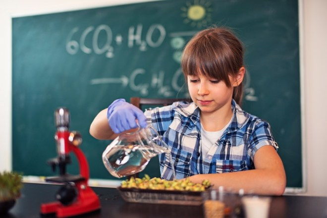 Little girl biology lesson. The girl is watering sprouting seeds during the lesson. Green blackboard visible in the background with photosynthesis equation.