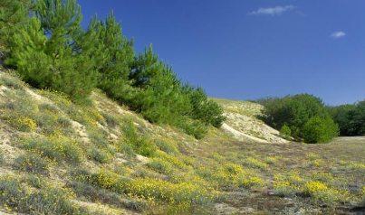 Le pied de la dune, côté terre