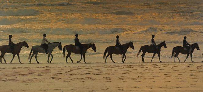 Chevaux au coucher du soleil, plage de Messanges
