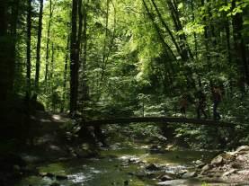 Brücke im Küsnachter Tobel