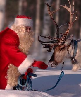 Papai Noel, usando seus trajes vermelhos com detalhes em branco, está numa selva totalmente coberta por neve, está na Lapônia, Finlandia, e está dando comida a um animal Alce com amplos chifres e usa arreios.