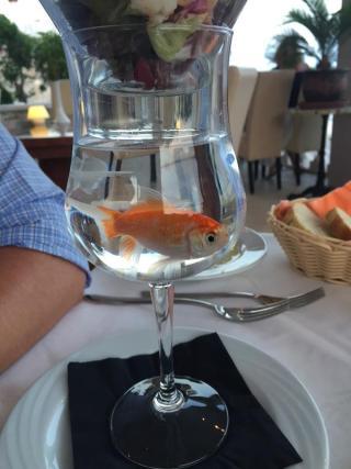 Uma taça de vidro bojuda com água serve de suporte para a vasilha de vidro com salada e coquetel de camarão que está apoiada sobre ela. Normal. Só que, na água dessa taça um peixinho vermelho nada no exíguo espaço.