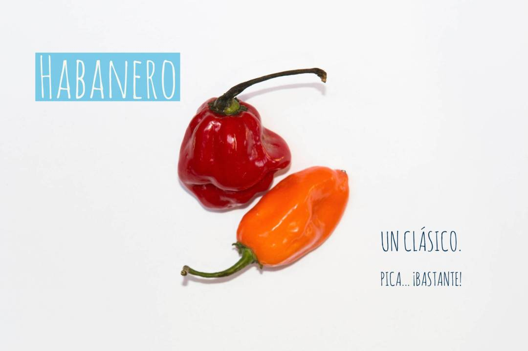 Panrotas-Picante-Habanero