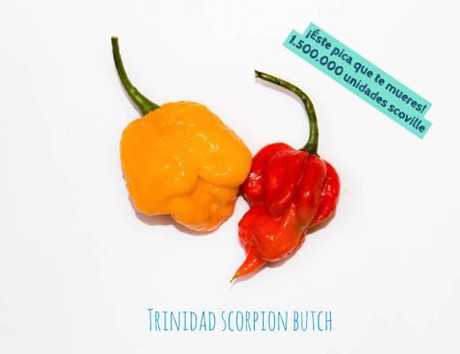 imagens de duas pimentas - Trinidad Scorpion Butch - a da esquerda é amarela e da direita vermelha